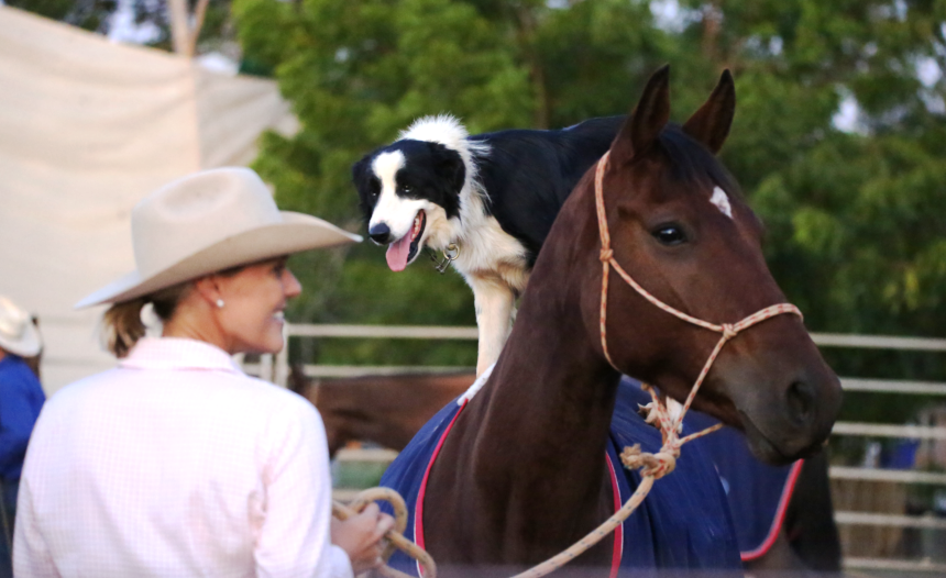 Annabel with Trev and Border Collie and Rhapsody the horse during a Katherine Outback Experience Show