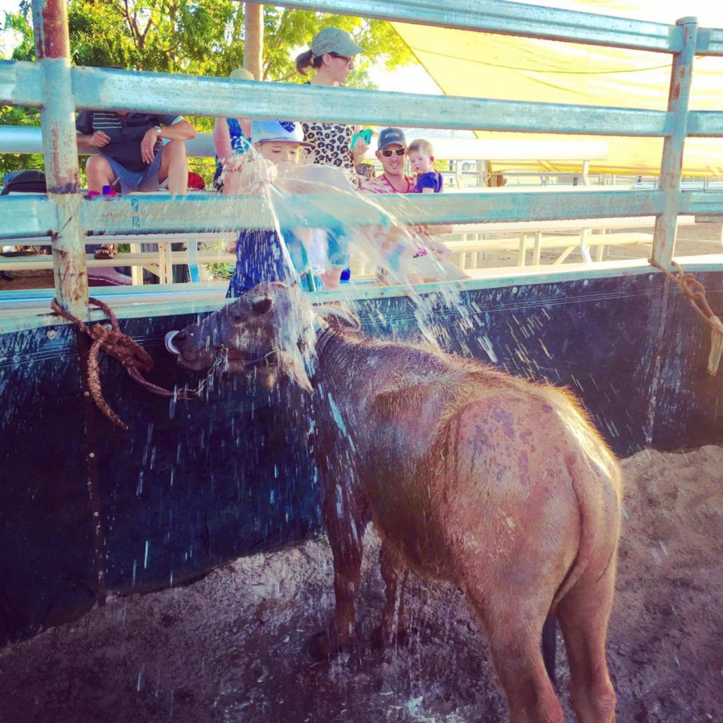 Buffalo Bill having a bath during a Katherine Outback Experience Show
