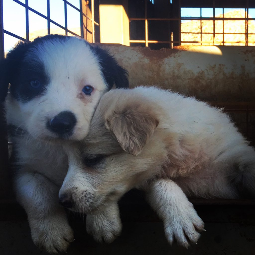 Puppy love at Katherine Outback Experience