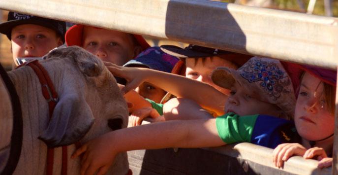 Kids patting the bull