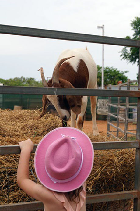 Plenty of hands-on opportunities with the animals at Katherine Outback Experience