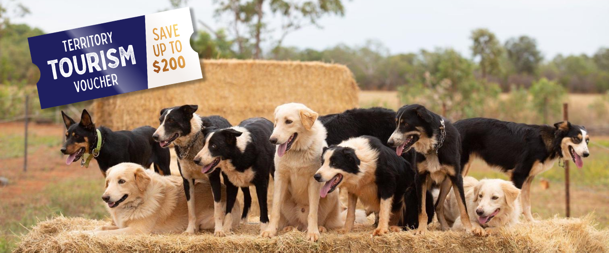 Redeem Territory Voucher at Katherine Outback Experience